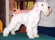 Busko White Diamont