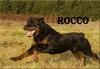 Rocco des Rotts de la Baronnie