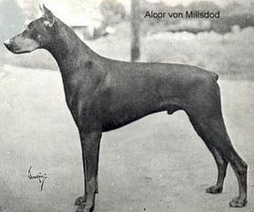 Alcor von Millsdod