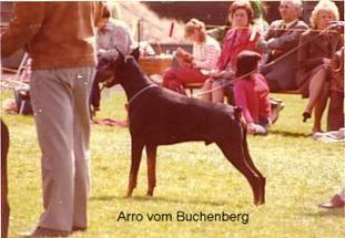 Arro vom Buchenberg