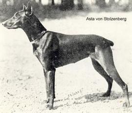 Asta von Stolzenburg