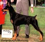 Marienburg's Morocco