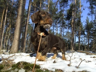 Odin vom Waldesgraben