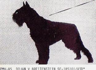 Dojan vom Breitenstein