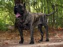 Mago de Dog Real