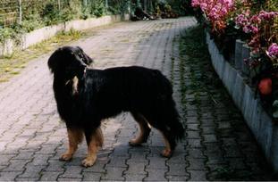 Moritz vom Schondratal