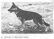 Brenda vom Baruther Land