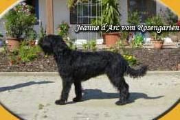 Jeanne d´Arc vom Rosengarten
