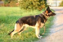 Luca vom Rungenhof
