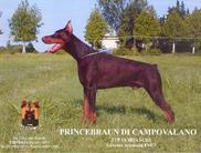 Prince Braun di Campovalano