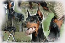 Therese-Dina vom Gebrannten Walde