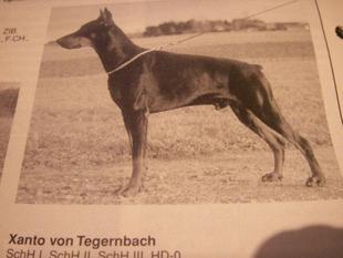 Xanto von Tegernbach