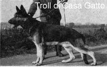 Troll di Casa Gatto