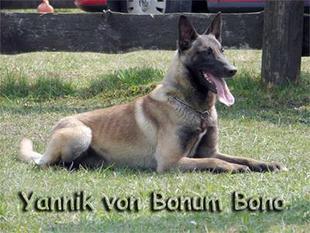 Yannik von Bonum Bono