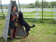 Zorro von der Jánvári
