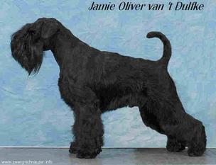 Jamie Oliver van't Dulfke