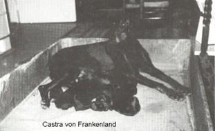 Castra vom Frankenland