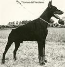 Thomas del Verdiano