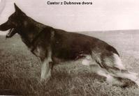 Castor z Dubnova dvora CS
