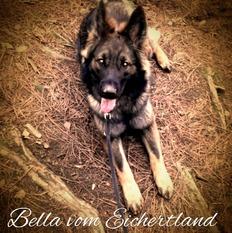 Bellatrix vom Eichertland