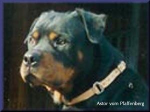 Astor vom Pfaffenberg