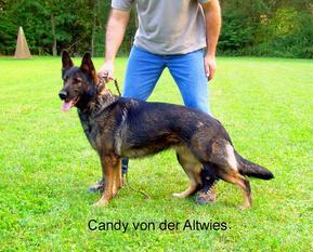 Candy von der Altwies