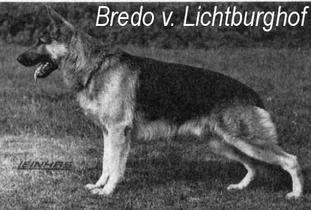 Bredo vom Lichtburghof