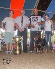 Bavaria Ives Black Champion