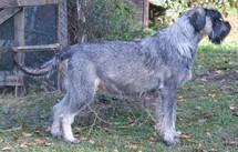 Indra aus der Uckermark