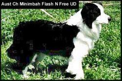 Minimbah Flash N Free
