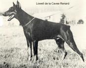 Lowell de la Cavee Renard