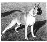 King von Olympia