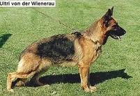 Ultri von der Wienerau