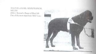 Baldur von der Karl-Adolf-Ranch