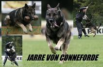 Jarre von Conneforde