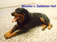 Bronko vom Dattelner Hof