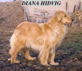 Diana Hidvig