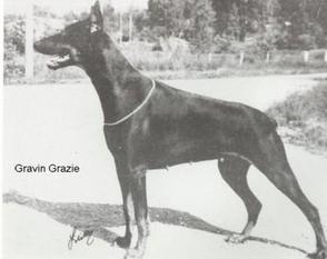 Bryanstam's Gräfin-Graziedotter