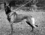 Cabila von Löwenfels