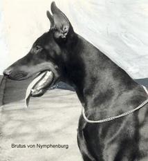 Brutus von Nymphenburg