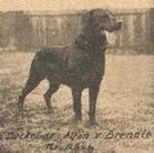 Alfon (Brendle)