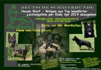 Zwinger vom Hexensturm R-Wurf 10.02.2014