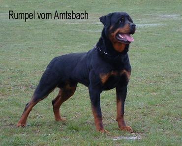 Rumpel vom Amtsbach