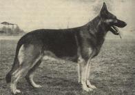 Artus Daheim