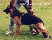 Xana von Vierhundert Hertz