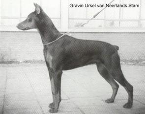 Gravin Ursel van Neerlands Stam