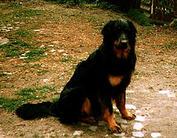 Baxter von der Diamantenen Aue