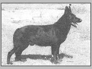 Alf vom Calbischen Werder
