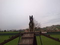 Panzer NPA Detection Dog