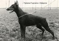 Fabiana Fusciana van Diaspora
